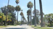 Palme a Beverly Hills