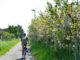 Pista ciclabile Modena Vignola