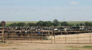 Ranch in Oklahoma