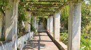 Salerno Giardino della Minerva verticale_16
