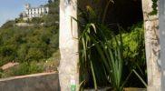 Salerno Giardino della Minerva verticale_17