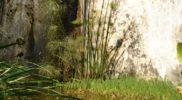 Salerno Giardino della Minerva verticale_8