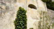 Salerno Giardino della Minerva verticale_9